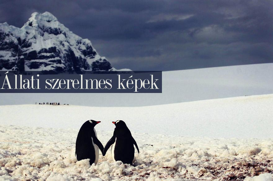 animal-couples-in-love-penguins_880cover.jpg