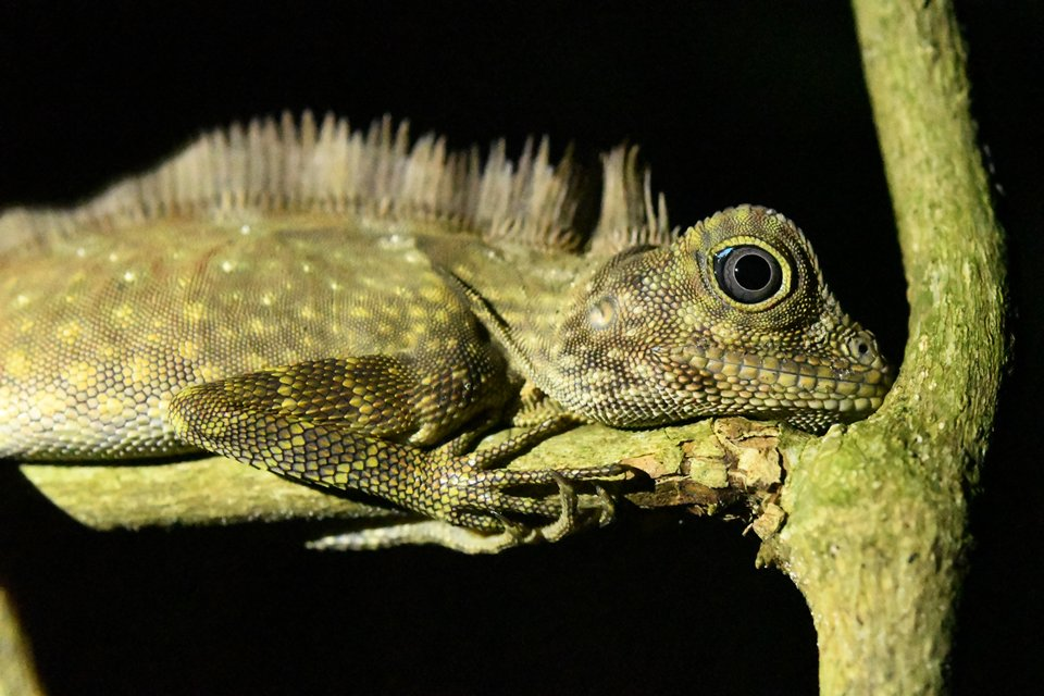 nikon_dslr_camera_d500_reptile_10_csl_9813_a4--sample-960-large.jpg