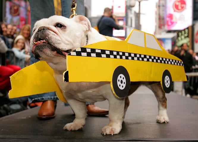 taxi-dog.jpg
