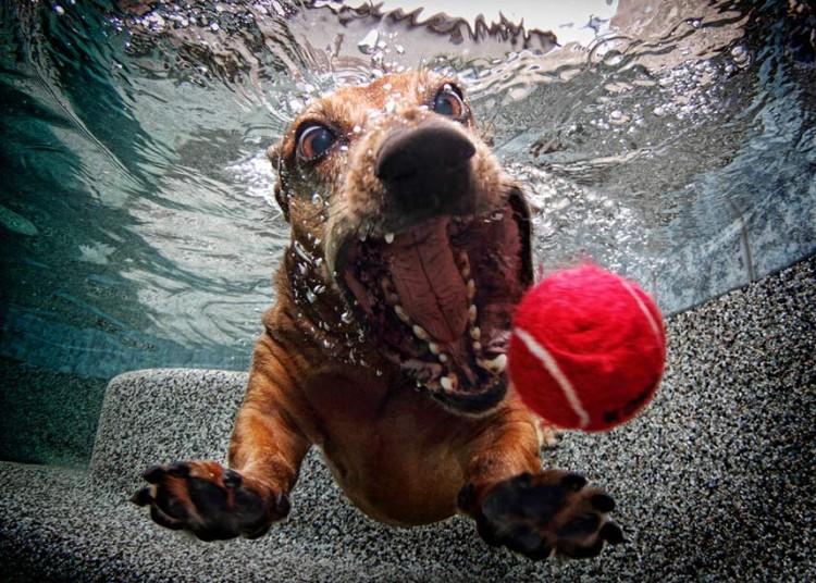 underwater-dog-2_2377686k.jpg