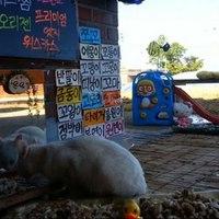 Dél-korea új online sztárjai a kóbor macskák
