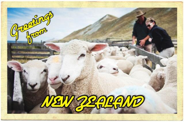 7-travels-post-card-new-zealand-sheep-600x400.jpg