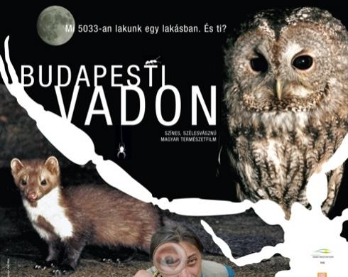 budapesti_vadon1.jpg