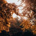 Mit nézz ősszel? - Négy film, négy hangulat