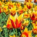 Anyák napja - Virtuális virágcsokorral