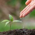 Szobanövényekkel a légszennyezettség ellen - Nevelj, gondozz, és szívj tiszta levegőt!