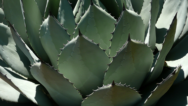 Leáldozóban a bőripar? Íme a legújabb alternatívák! - Vegán bőrök almából, ananászból, gombából és kaktuszból