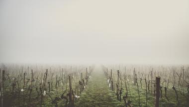 Veszélyben a magyar bor? - A szőlőtermesztés jövője a klímaváltozás tükrében