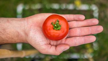 Hogyan termesszünk otthon paradicsomot? + Kisfilm