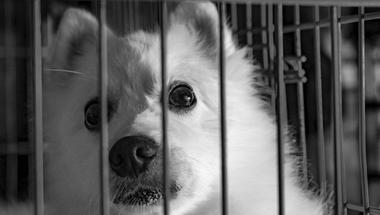 Szépség állatkínzás nélkül – Ma van a kísérleti állatok védelmének világnapja