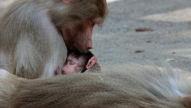 Szeretet nélkül nem lehet élni - Mi az, ami fontosabb az anyatejnél?