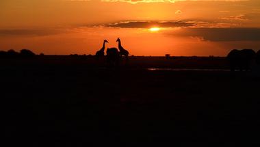 Orvvadászat helyett safari: a fenntartható turizmus jövője Afrikában kezdődhet