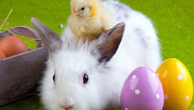 Húsvét mérnök szemmel - Jótanácsok a BCE Élelmiszertudományi Karától