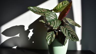 Urban jungle - hasznos tanácsok kezdő növényszülőknek