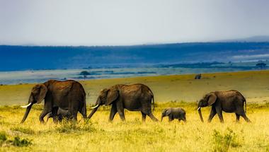 Elefánt trágyából füzet vagy könyv