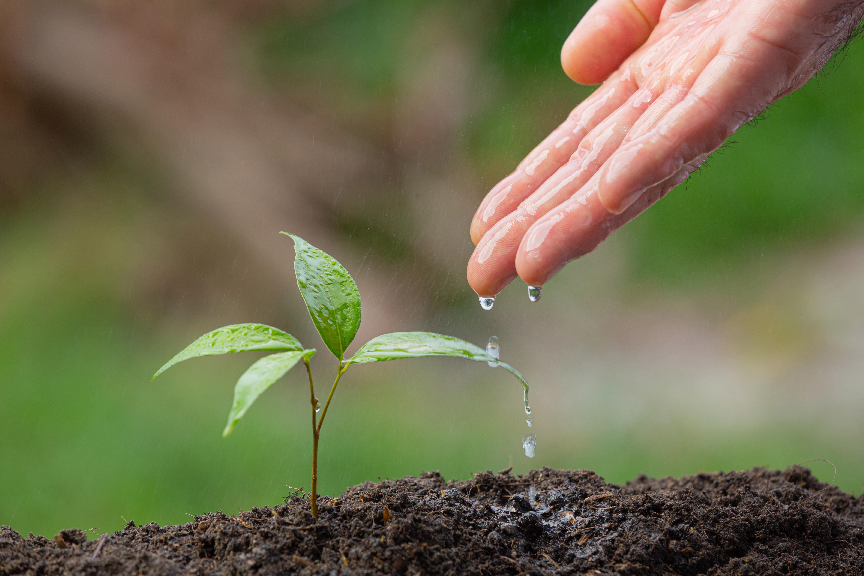 Szobanövényekkel a légszennyezettség ellen