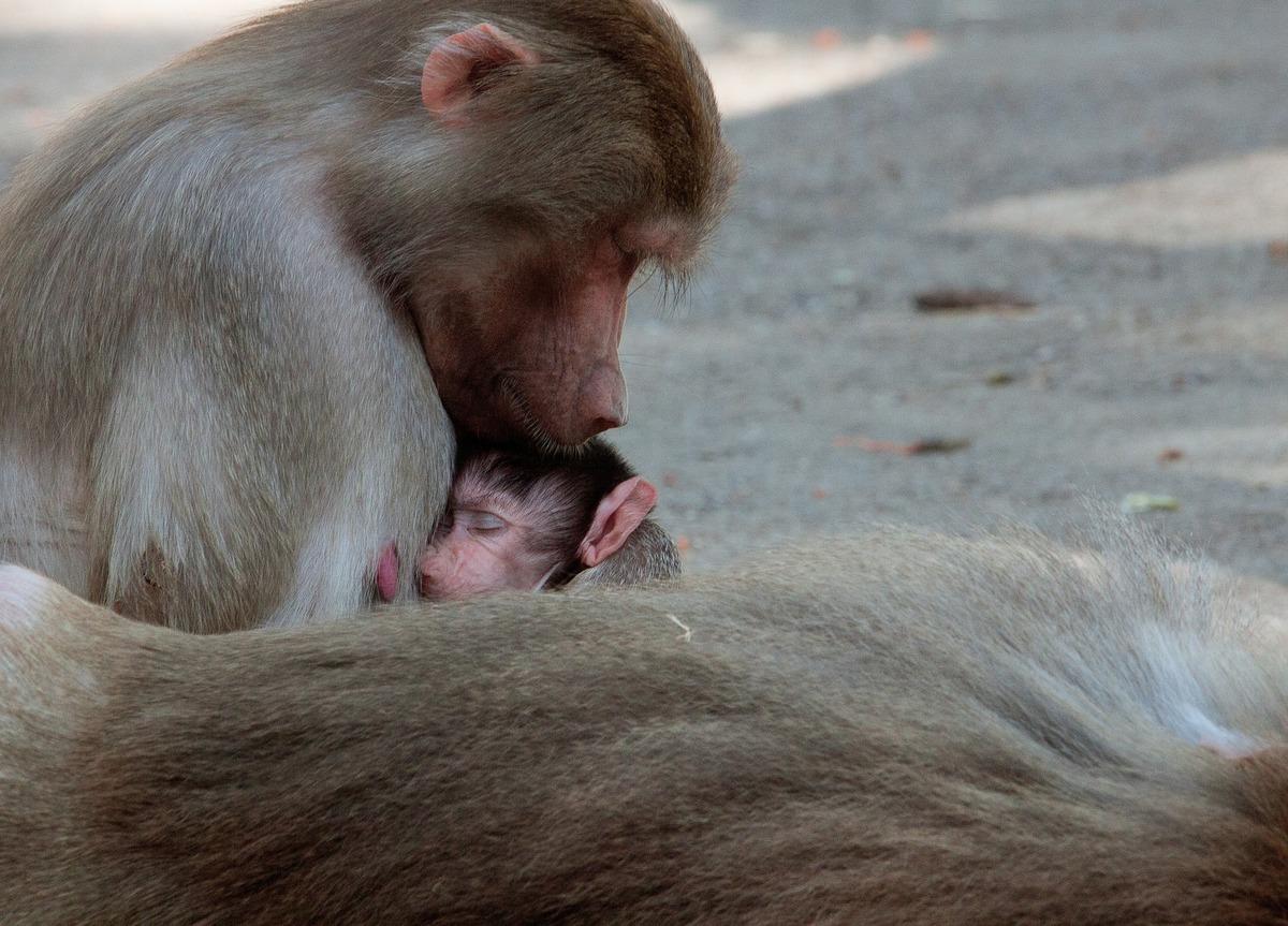 monkey-3800103_1920.jpg