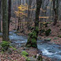 Őszi színek a Mátrában