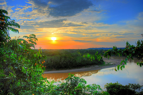 amazon-jungle.jpg
