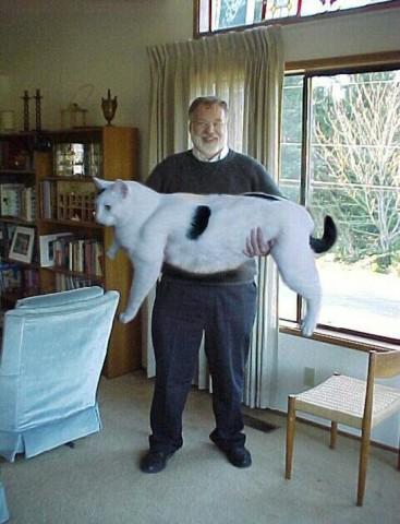 zz-05-vilag-legnagyobb-macskai.jpg