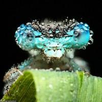 Hihetetlen makró fotók rovarokról
