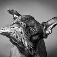 Kutyák mozgásban
