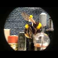 A világ legkisebb animációja képekből