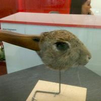 Optikai illúzió - Kacsa, vagy nyúl?