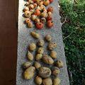 A #Creator Nyitott Műhely veteményeskertjének idei termése... a #barkácsolás jobban megy... #tomato, #potato, #bio, #diy,