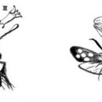Ízeltlábú test-evolúció - 1.