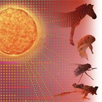 Regulating Evolution: How Gene Switches Make Life