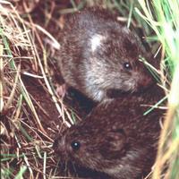 Egerek és jellemek