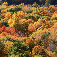 Mi történik ősszel a falevelekkel?