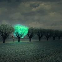 Lehet, hogy a jövő útjait világító fák fogják szegélyezni, de nem a közeljövőét