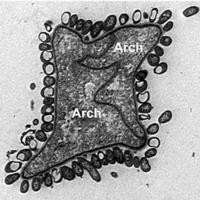 Az eukarióta sejt eredetének