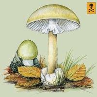 Azok a csodálatos gombák - a gyilkos galóca