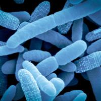 Mire jó a GMO 32. - Élő gyógyszer anyagcserezavarokra