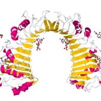 A CD14 és az immunoglobulin