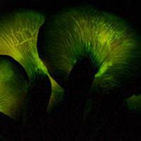 Azok a csodálatos gombák - izelitő