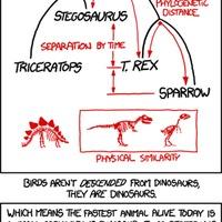 Toll-evolúció