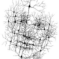 Mi van az agyunkban?