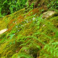 Árnyékban bujkáló géntranszferek