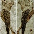 A többsejtűség eredete