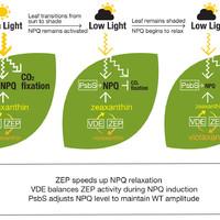 Mire jó a GMO 28. A fotoszintézis és a hozam