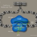 Dezinformációk - A génszerkesztés