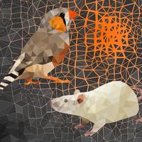 Tíz éves az optogenetika - de ismerjük-e a korlátait?
