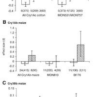 A GMO veszélyei 4. - Bt-toxin termelő növények