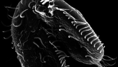 A tizenhatezer kromoszómás genom