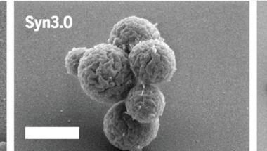 Mekkora az élethez szükséges minimális genom?