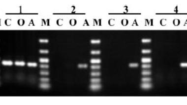 Horizontális génátvitel ízeltlábúakban